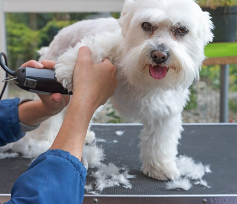 short hair dog grooming tips
