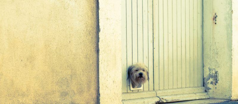 dog door installation