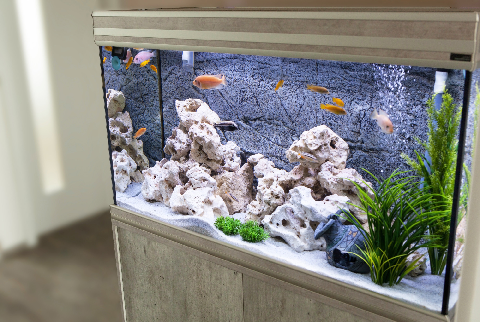 fish tank in home