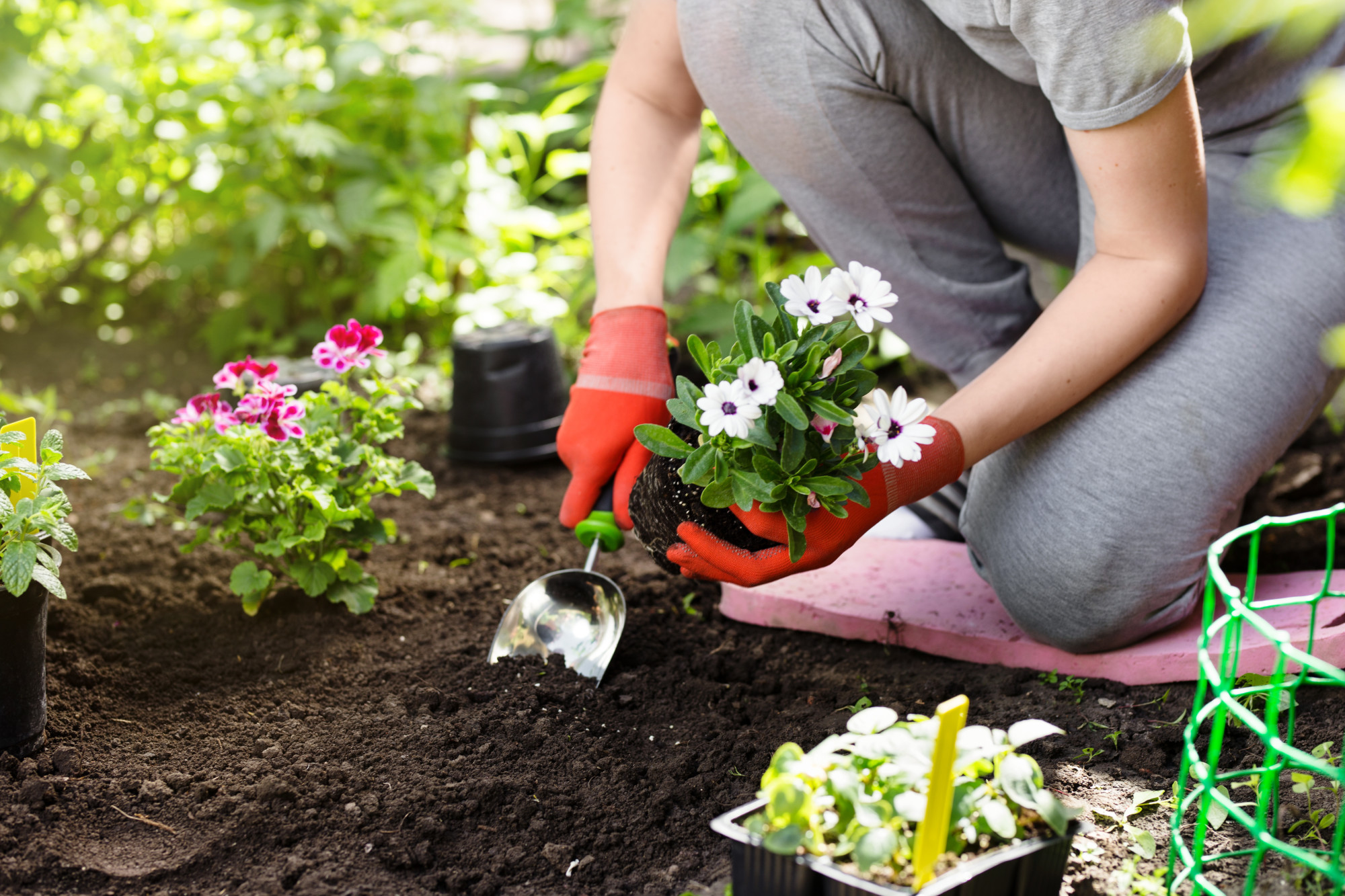 12 Ways to Make Money from Your Garden