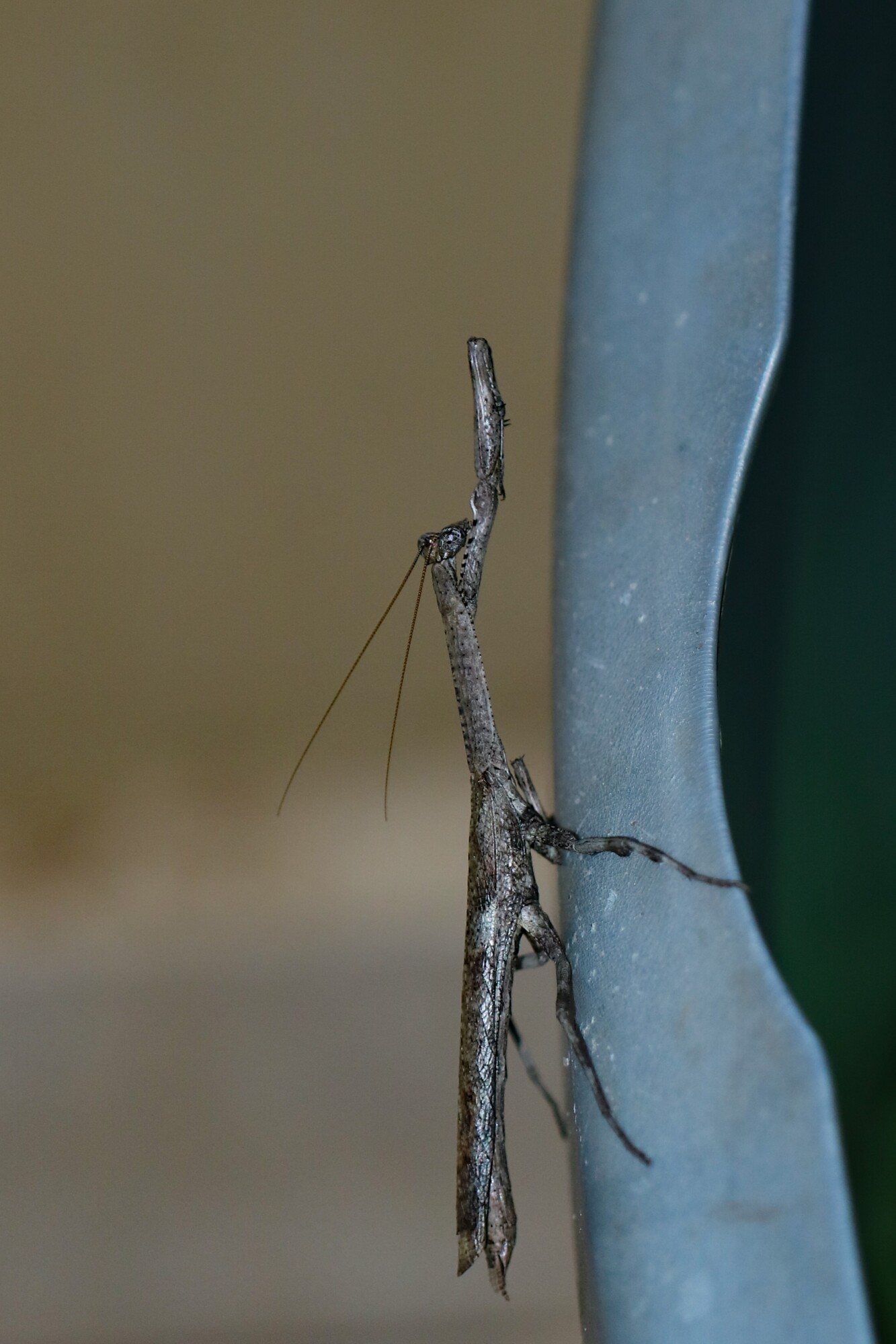 Prevent Stick Bugs From Infesting Your Home