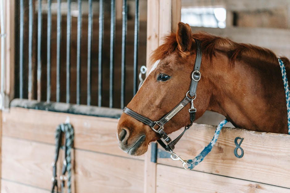 Exercises for Horses